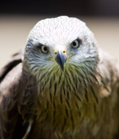 beack: image of a bird of prey over a natural background
