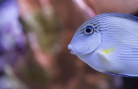 tropical animal in a salt water fish tank aquarium under water. Flash light can kill the animals so the photo was taken with available lights and reflectors Stock Photo - 5467499