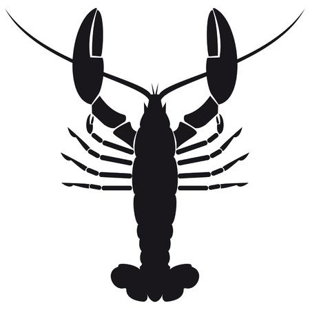 crustaceans: Silhouette shrimp