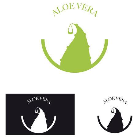 aloe vera: Leaf of Aloe Vera