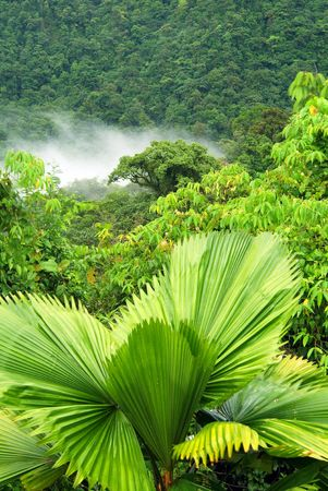 hillside: A lush hillside of green in the rain forest of costa rica