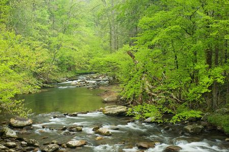 A stream flows through the forest in the Smoky mountain N.P., Tenn. Фото со стока
