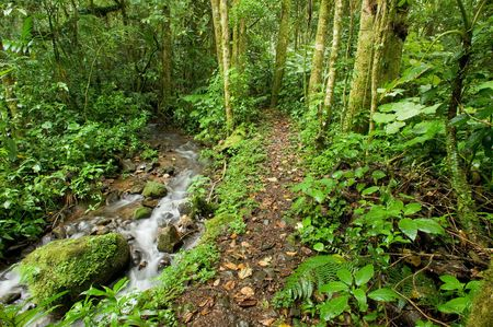 A clear stream runs alongside a trail in the Costa Rica rain forest Reklamní fotografie