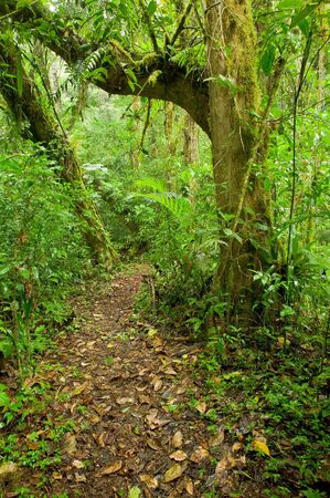 A trail leads through the rain forest in Costa Rica.