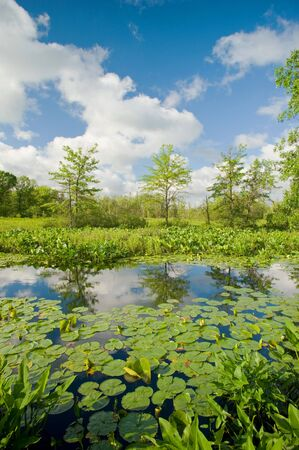 Blue sky and clouds reflect in a wetland in northern Indiana. Фото со стока