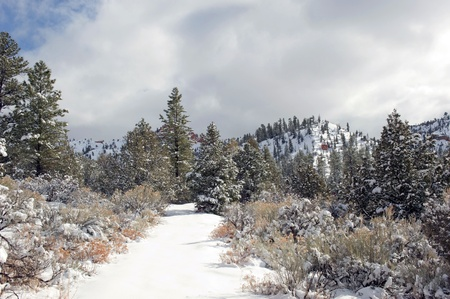 clearing the path: A snow covered path leads through a clearing in a western pine forest