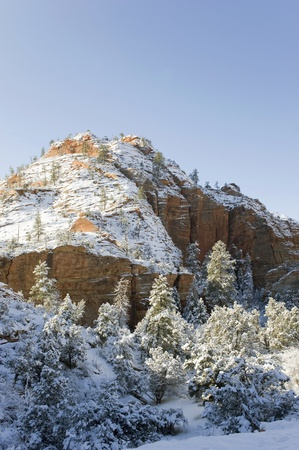 blanketed: Early morning after a snowstorm has blanketed the landscape in Zion N P , Utah
