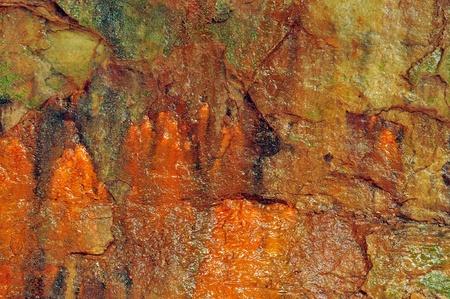 damp: Minerale colorazione Colorful su una parete di roccia umida in un canyon di un parco di Stato