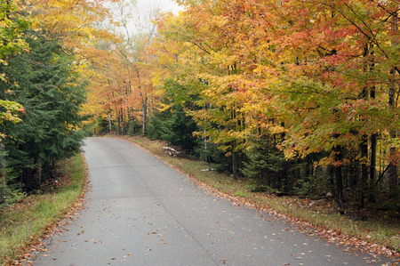 A paved county road curves through the brilliant autumn forest of northern Wisconsin  Фото со стока