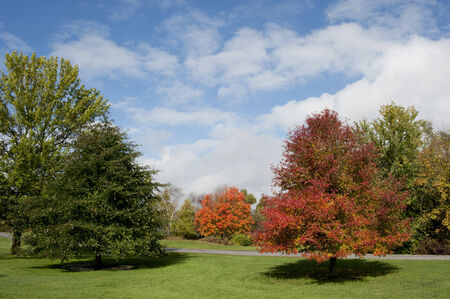 brilliant colors: Brilliant colors of maple trees in the fall.