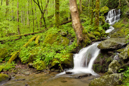 smokies: A small waterfall cuts through the forest in the Smokey Mountain N.P. in eastern Tennessee.