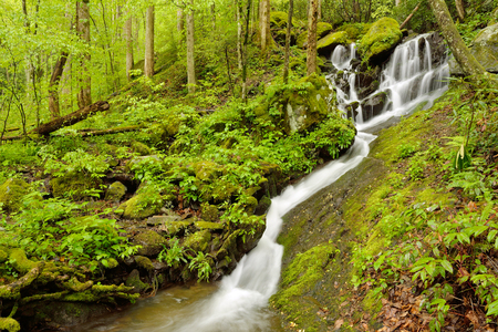 the smokies: Small stream flowing over rocks on hillside in the Smokies.