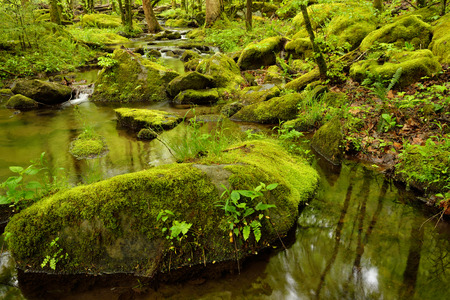 A small clear stream meanders through large boulders in the deep forest.