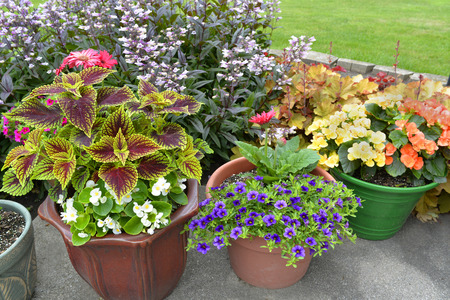 Different sizes and shapes of pots with colorful plants in full bloom. photo