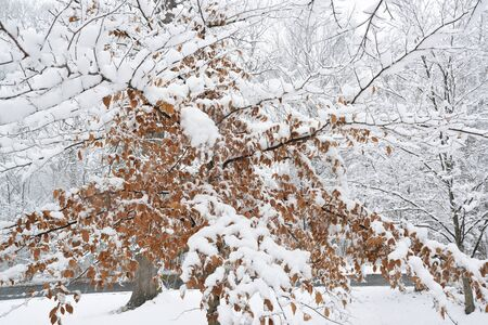 late fall: A late fall snowstorm coats the branches of trees with wet snow.