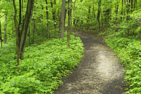 A pathway leads through a lush green forest in springtime.