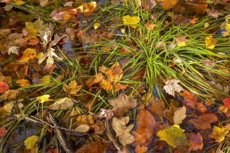 Colorful leaves and green clumps of grass on a midwest forest floor.