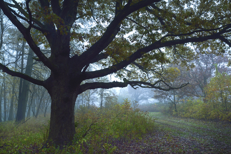 After heavy rains fog sets in the woods at the Kankakee river park  in northwest Indiana.