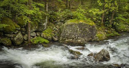Rushing stream through Tennessee wilderness.