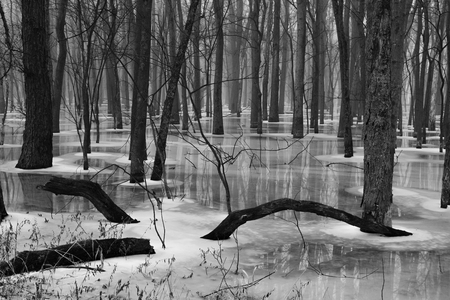 A black and white version of a frozen pond in a midwest oak forest. Фото со стока