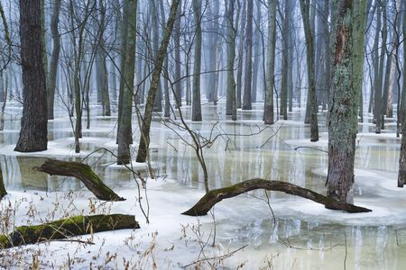 Light fog and ice in a midwest forest in winter.