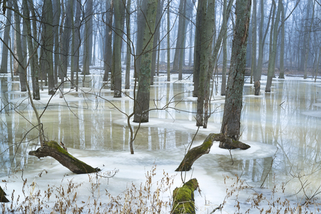 A winter thaw gives way to reflections in a midwest forest. Фото со стока