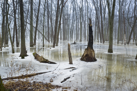 Reflections on a partially thawed stream in a midwest forest,winter time.