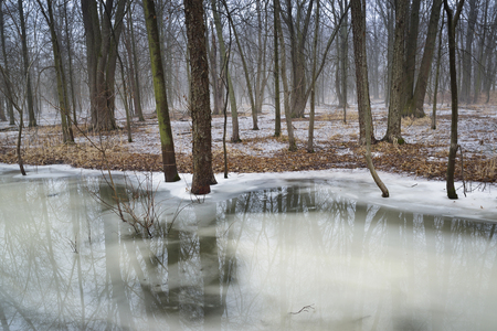 A late winter thaw begins on a small midwest stream in an oak forest.