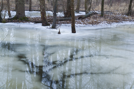 Melting ice in a stream gives way to abstract veins of water in a Indiana forest. Фото со стока