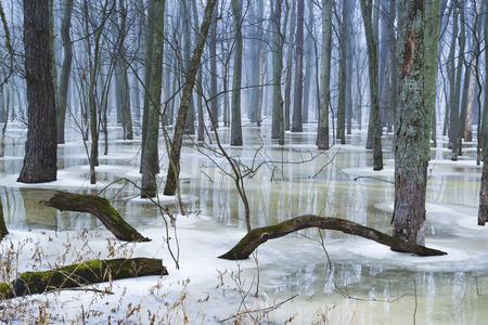 Partially thawed forest gives way to reflections on still waters in a midwest forest.