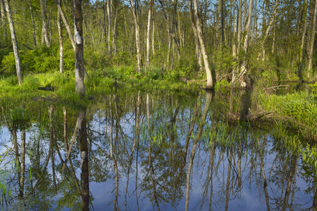 Reflections of trees and blue skies on a small pond.