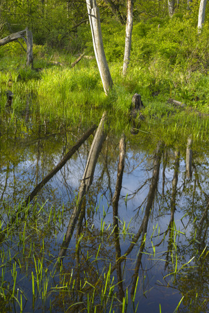 Reflections of trees and blue sky on a small pond.