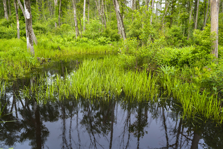 Dark reflection in a small pond surrounded by lush green growth in summer.