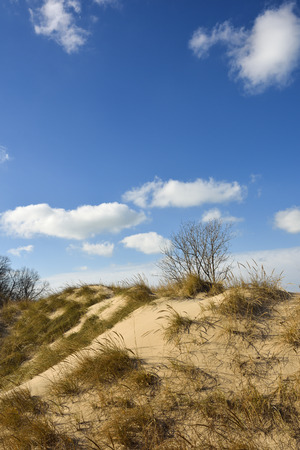 Golden grass and blue skies at the Indiana Dunes SP in early winter.