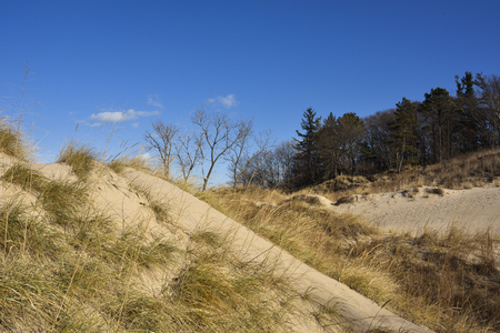 Golden sand dunes with clear blue sky. Фото со стока