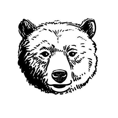 Vector pen and ink hand drawn illustration of a bear head portrait facing forward. Retro vintage style sketch nature wildlife design element for web and print, isolated on white background.