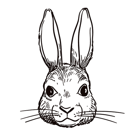Vector hand-drawn pen and ink black and white sketch character illustration of a bunny rabbit head portrait. Realistic vintage retro style hare face design element. Nature, wildlife woodland theme art