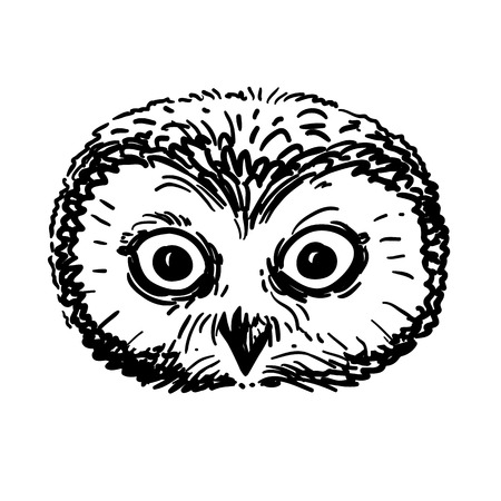 Vector hand drawn black and white illustration of an owl portrait. Retro vintage sketch style, realistic owl face pen and ink drawing. Nature woodland animal bird themed design element.