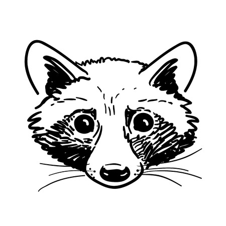 Vector hand-drawn pen and ink black and white cute raccoon face portrait illustration. Nature wildlife themed vintage retro sketch style design element for web and print.