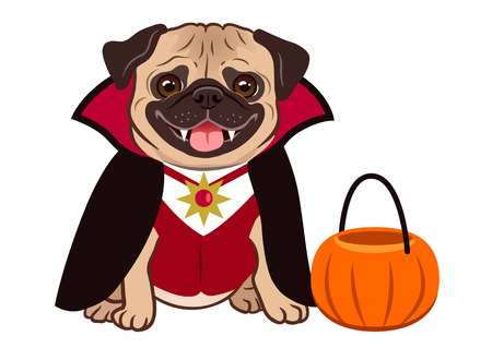 Halloween pug dog in vampire costume cartoon illustration. Cute friendly fat chubby fawn sitting pug puppy, smiling with tongue out. Pets, dog lovers, animal themed design element isolated on white. 矢量图像