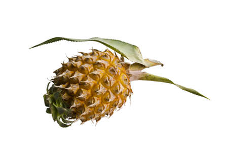 Baby sweet Pineapple, Thailand Stock Photo - 12755694