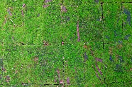 brick floor: Piso de ladrillo antiguo, con cubierta de musgo Foto de archivo