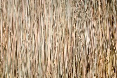 Dry Straw from thailand  Stock Photo - 12756483