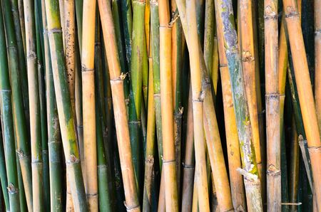 View of thai bamboo tree Stock Photo - 12978259