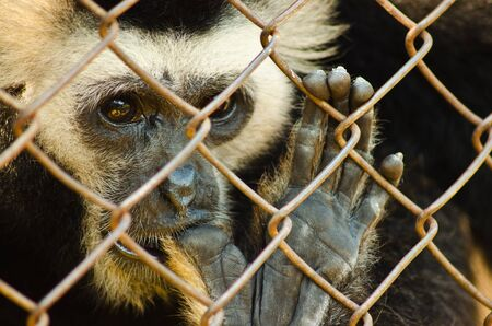 Loney monkey behind the cage  photo