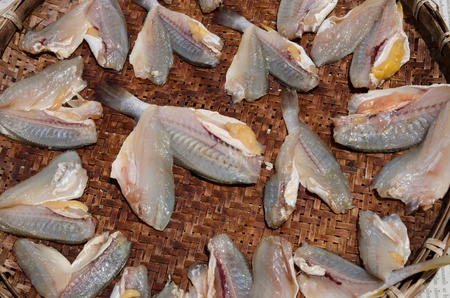 Dry fish on bamboo tray in direct sunlight  Stock Photo - 13976943