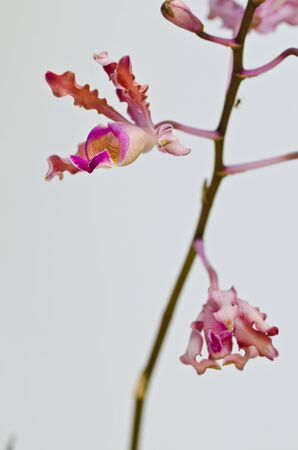 Pink orchid in isolated Stock Photo - 13976741