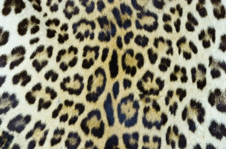 Real tiger fur for background  Stock Photo - 13976975