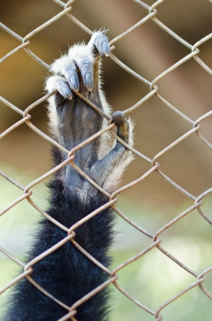Closeup animal hand in cage photo