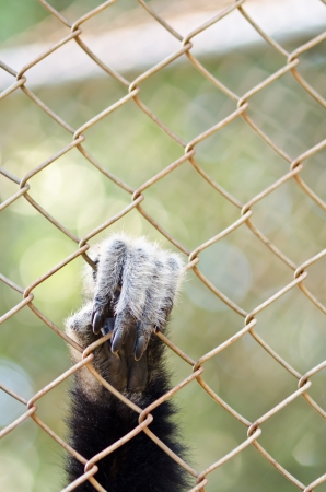 Monkey hand in the cage